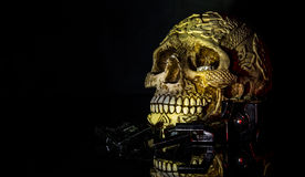 Still death. A still life photo of a skull and ring Royalty Free Stock Images