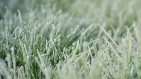 Still Dew 3. Closeup of grass on a frosty morning Royalty Free Stock Photos