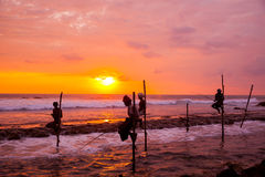Still fisherman's - Sri Lanka Royalty Free Stock Photo