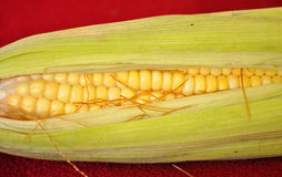 Still fresh corn Stock Images