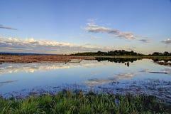 Still lake water reflecting the sunset sky Royalty Free Stock Photo