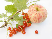 Still-life. With a red currant and an apple Royalty Free Stock Photos