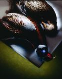 Still life. With duck and pheasant Royalty Free Stock Images