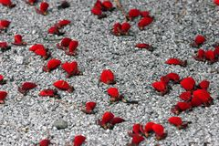 Still Life. Scene of Red Petals Stock Photos