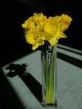 Still life. Flowers in vase with sharp shadows royalty free stock photography