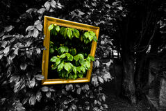 Still life Stock Image