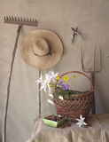 Still life. Of old garden tools, baskets of flowers and cherries stock images