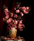 Still life. Sakura in a vase on a dark background Royalty Free Stock Images