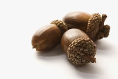 Still life of acorns. Royalty Free Stock Images