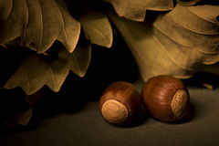 Still-life with acorns and dry oak leaves. Autumn still-life on green background Royalty Free Stock Photo
