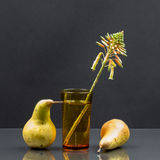 Still life with aloe vera flower in a glass of water and pears Stock Images