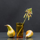 Still life with aloe vera flower in a glass of water and pears Stock Photos