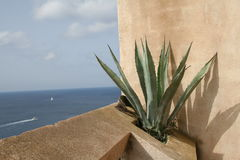 Still life of an aloe vera with the sea in the background in Bonifacio, Corsica Stock Images