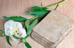 Still life: ancient book and white flower of a peony. Royalty Free Stock Photo