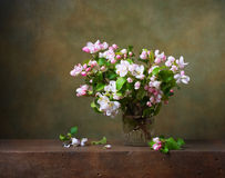 Still life with apple blossom Stock Image