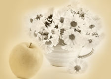Still life with apple and a cup, sepia. Still life with yellow apple and a bouquet of white chrysanthemums in yellow cup, sepia royalty free stock image
