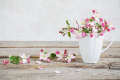 Still life of apple flowers Royalty Free Stock Photo