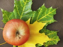 Still life with Apple and maple leaves stock image