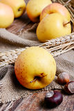 Still life with apples Stock Images