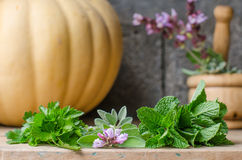 Still life of aromatic herbs. Stock Photo