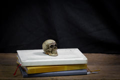 Still life art photography concept with skull and memory Stock Images
