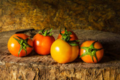 Still life art photography with tomatoes Royalty Free Stock Photography