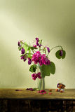 Still life art with pink flower Royalty Free Stock Photos