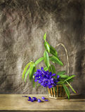 Still life art with purple flower Royalty Free Stock Photo