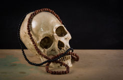 Still life art of skull Stock Images