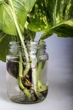 Still life. Art still life use glass bottle Royalty Free Stock Photography