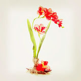 Still life from artificial flowers. Royalty Free Stock Photo
