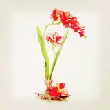 Still life from artificial flowers. Stock Image