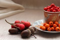 Still-life from autumn fruits of mountain ash, acorns, hawthorn and horse chestnut. Stock Photo