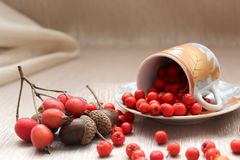 Still-life from autumn fruits of mountain ash, acorns, hawthorn and horse chestnut. Royalty Free Stock Photo