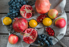 Still life of autumn fruits, pomegranates, grapes, apples. Stock Images