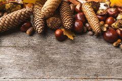 Still life of autumn ingredients stock photos