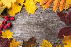 Still life of autumn ingredients royalty free stock photo