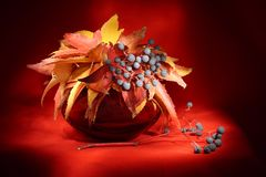 Still life with autumn leaves Stock Photography