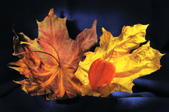 Still life with autumn leaves and winter cherry stock images