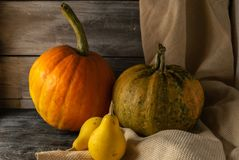 Still life of autumn pumpkins of various sizes. on a wooden background. royalty free stock photo