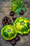 Still life with autumn squash Stock Images