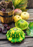 Still life with autumn squash Stock Photography