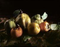 Autumnal fruits on leaves royalty free stock photography