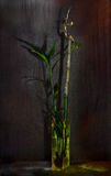 Still-life with bamboo royalty free stock image