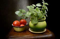 Still Life with basil and tomatoes Stock Photos