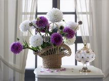 Still life with basket autumn dahlia flowers. Classic floral still life with a luxurious bouquet, creating a summer mood in the house Royalty Free Stock Photos