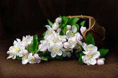 Still life with a basket of flowers apple. Royalty Free Stock Photo