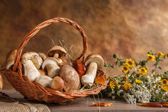 Still life with basket of mushrooms Stock Photos