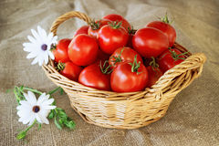 Still life of a basket of tomatoes Royalty Free Stock Photos