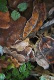 Still life of beautiful autumn frozen leaves Stock Photos